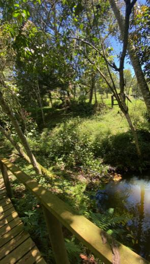 baño-de-bosques3