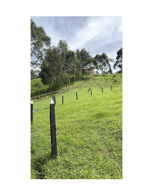 camino-verde-granja