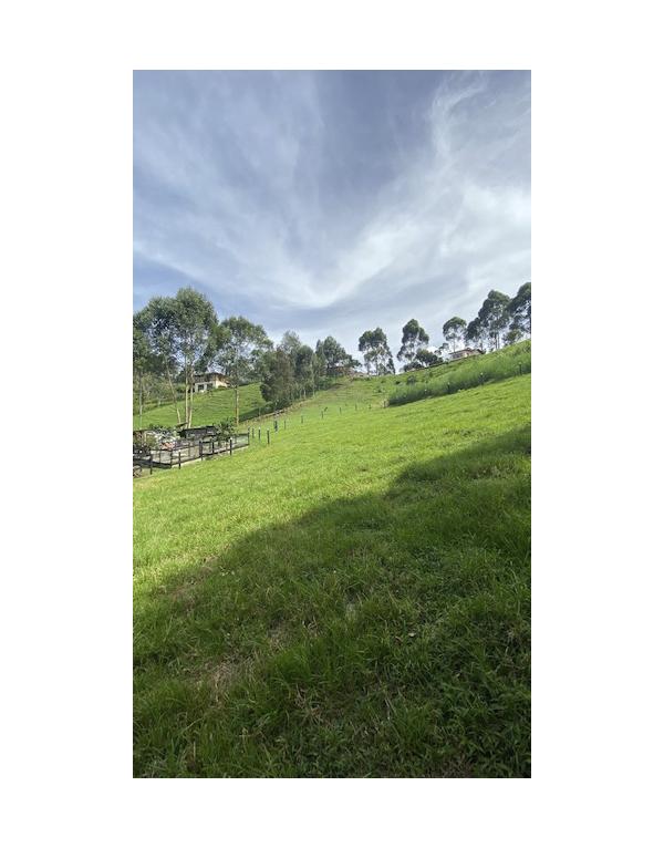 camino-verde-granja2
