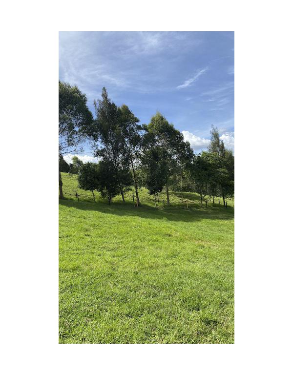 grandes-paisajes-verdes4