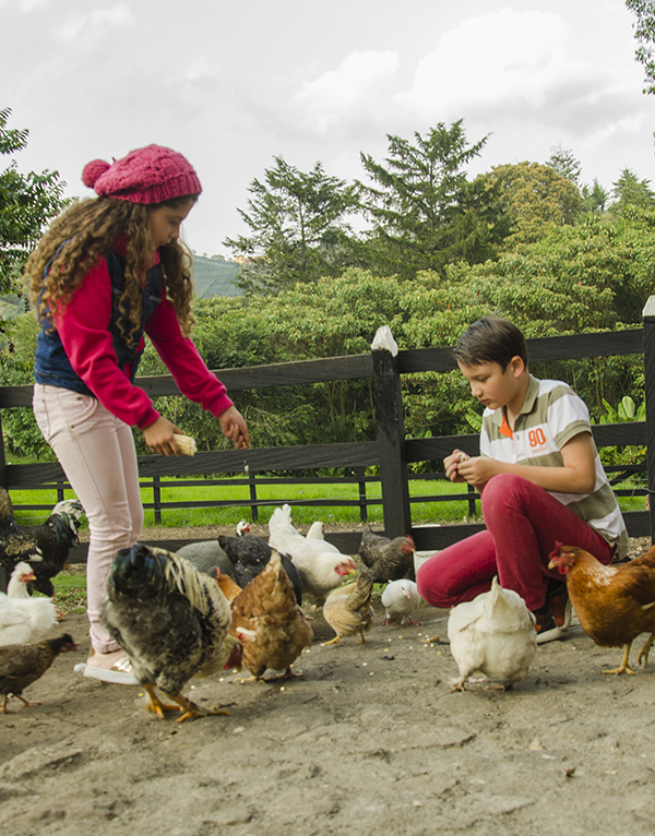 granja-con-gallinas