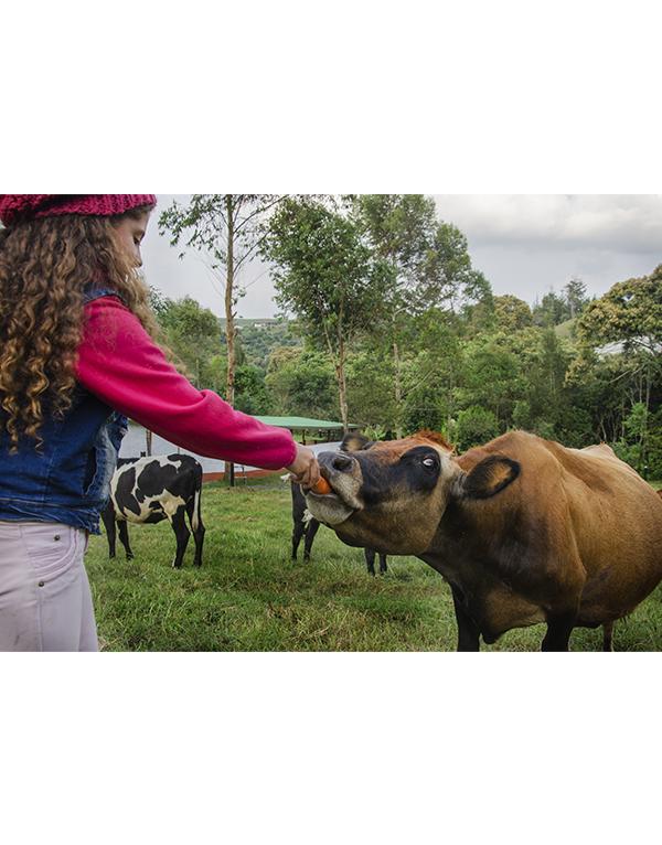 niña-alimentando-vaca