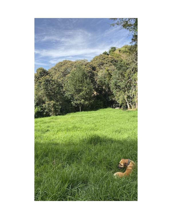 paisajes-verdes-2