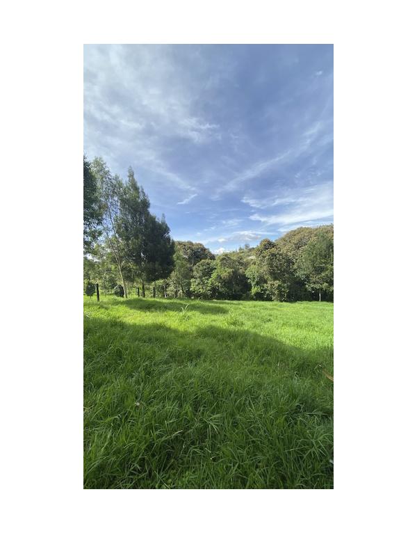 paisajes-verdes-4