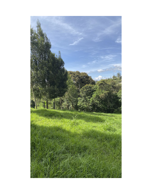 paisajes-verdes-5