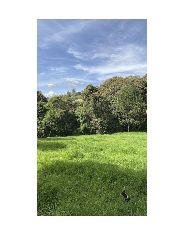paisajes-verdes-6