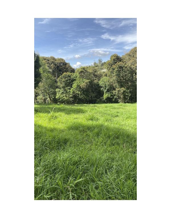 paisajes-verdes-7