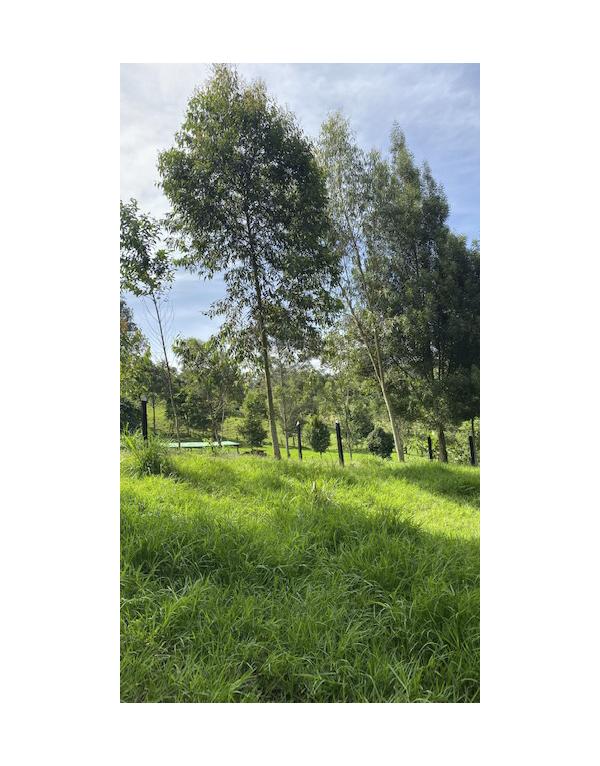 paisajes-verdes